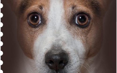 27 januari: Honden naderbij (Jack Russel Terrier)