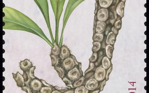 27 januari: Fantastische Flora (Mierenplant)