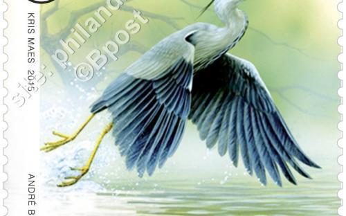 23 maart: Dieren in beweging (André Buzin) - Blauwe Reiger