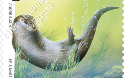 23 maart: Dieren in beweging (André Buzin) - Europese Otter