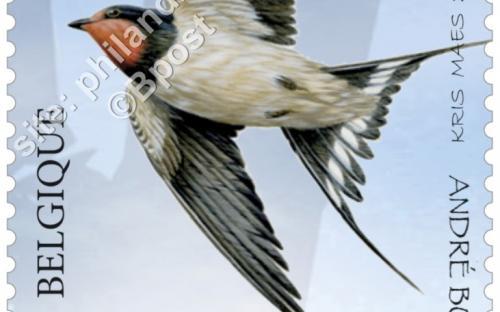 13 juni: Het nieuwe Zwin, Boerenzwaluw (Hirundo Rustica)
