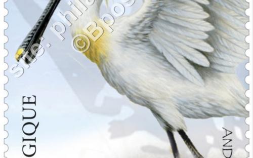 13 juni: Het nieuwe Zwin, Lepelaar (Platalea Leucorodia)