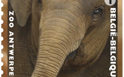 13 mei: Natuur 2013, Zoo van Antwerpen, Olifant