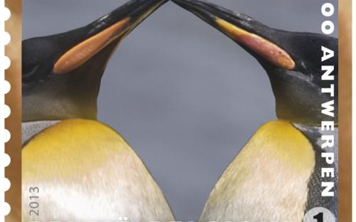 13 mei: Natuur 2013, Zoo van Antwerpen, Pinguins