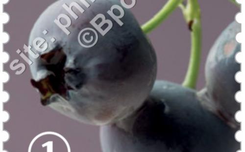 29 juni: Vergeten fruit (Blauwe Bes)