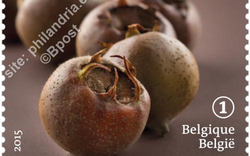 29 juni: Vergeten fruit (Mispel)