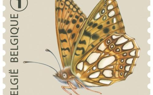 6 oktober: Vlinders van M.Meersman, Kleine Parelmoervlinder (Rolzegel)