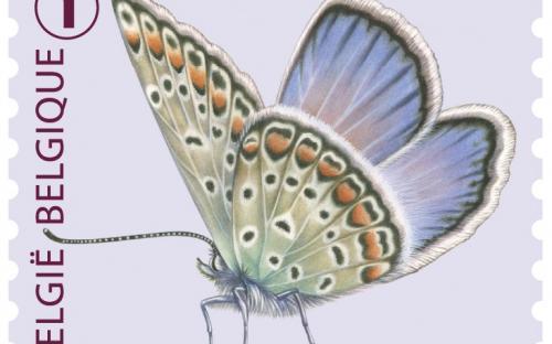 6 oktober: Vlinders van M.Meersman, Icarusblauwtje (Rolzegel)