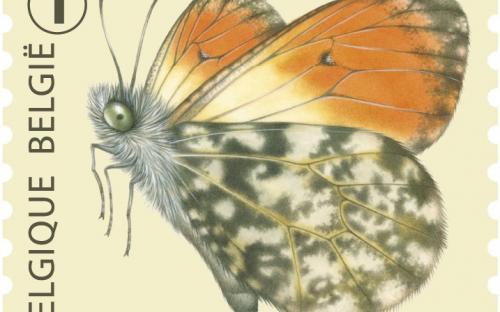 6 oktober: Vlinders van M.Meersman, Oranjetipje (Rolzegel)