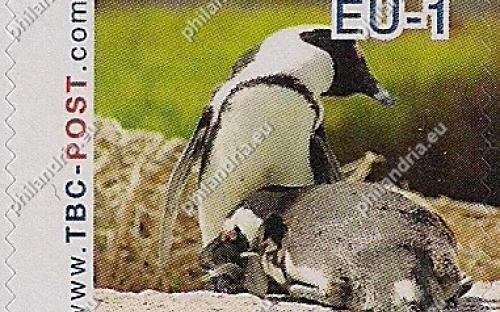 7 augustus: EU-1: Zwartvoetpinguïn (kijkt naar rechts, zonder zee)