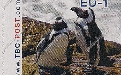 7 augustus: EU-1: Zwartvoetpinguïn (koppeltje)