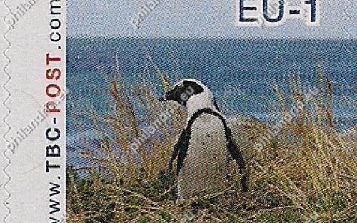 7 augustus: EU-1: Zwartvoetpinguïn (kijkt naar links)