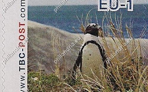 7 augustus: EU-1: Zwartvoetpinguïn (kijkt naar rechts, met zee)