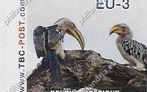 20 november: EU-3: Ethiopische geelsnaveltok (op tak)
