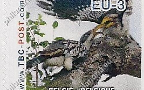 20 november: EU-3: Ethiopische geelsnaveltok (jong krijgt voeding)