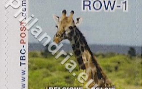 18 februari: ROW-1: Giraf 8