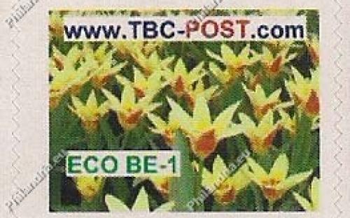 ECO BE-1 (€0.63) - Keukenhof, Tulipa Tarda