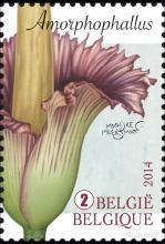 België: Fantastische Flora