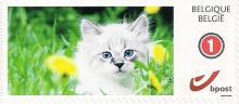 België: bpost, nieuwe thematische postzegels - 'Katjes'