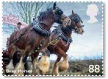 Groot Brittanië: Working Horses