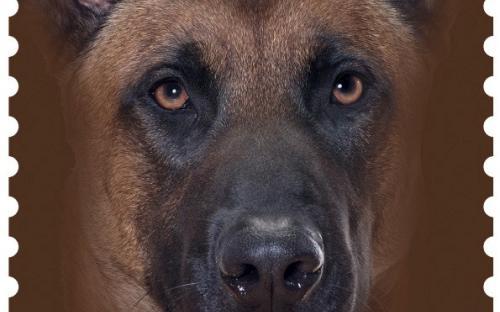 27 januari: Honden naderbij (Mechelse Herder)