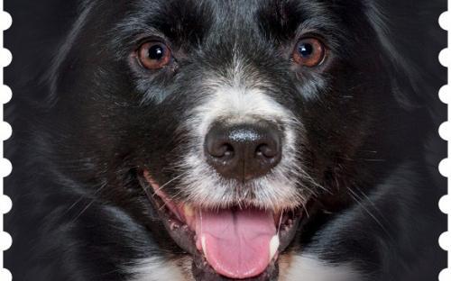 27 januari: Honden naderbij (Border Collie)