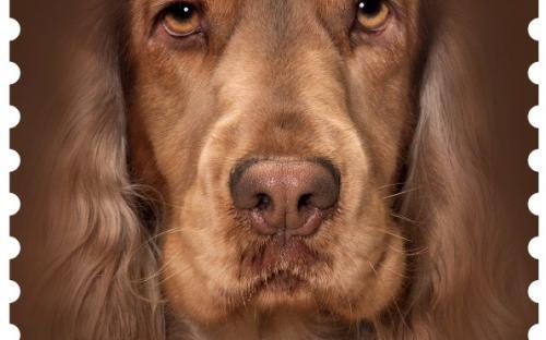 27 januari: Honden naderbij (Cocker)