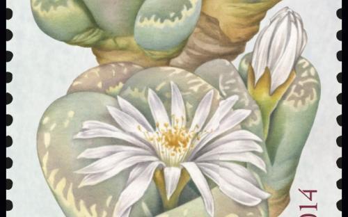 27 januari: Fantastische Flora (Levende Steentjes)