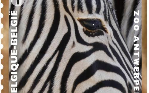 13 mei: Natuur 2013, Zoo van Antwerpen, Zebra