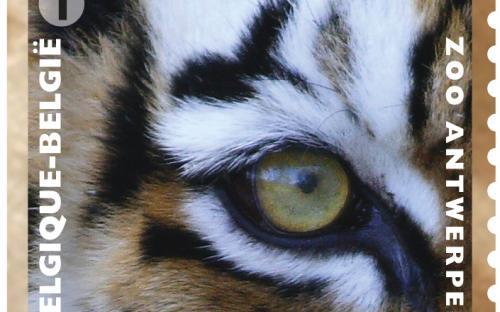 13 mei: Natuur 2013, Zoo van Antwerpen, Tijger