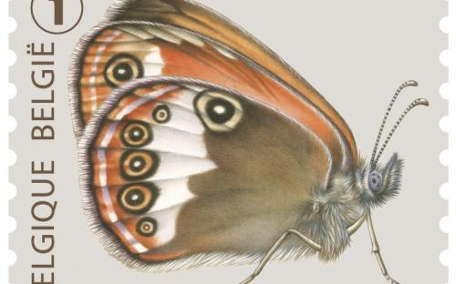 6 oktober: Vlinders van M.Meersman, Tweekleurig Hooibeestje (Rolzegel)