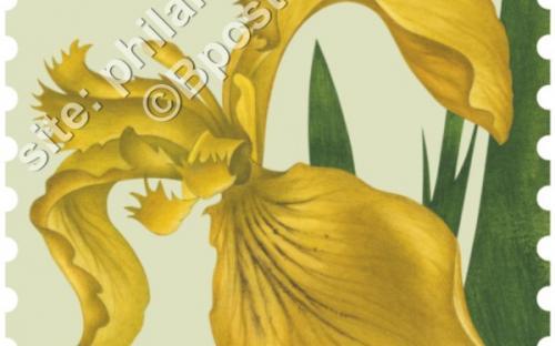 24 oktober: Bloemen, Gele Iris
