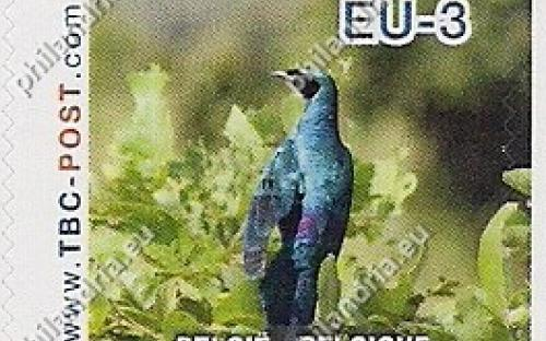20 november: EU-3: Grote glansspreeuw (rugaanzicht)