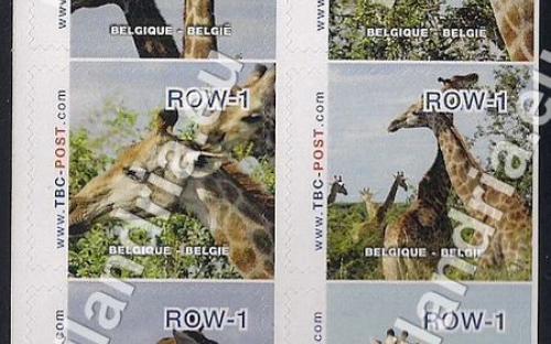 18 februari: ROW-1: Giraf (compleet vel)
