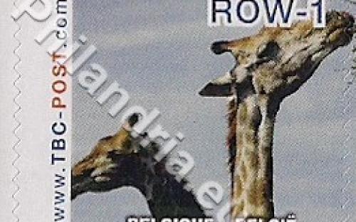 18 februari: ROW-1: Giraf 3
