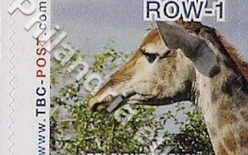 18 februari: ROW-1: Giraf 4