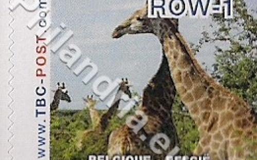 18 februari: ROW-1: Giraf 6