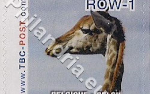 18 februari: ROW-1: Giraf 7